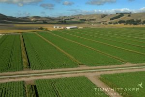 Aerial Photography_Tim Whittaker_Commercial Photographer_Photography_Hawkes Bay001.jpg