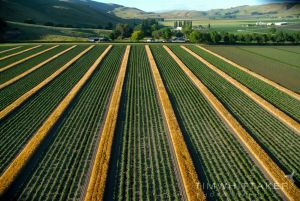 Aerial Photography_Tim Whittaker_Commercial Photographer_Photography_Hawkes Bay006.jpg